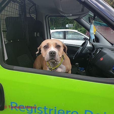 Tierheim Hanau Tierschutzverein Hanau U U E V Hunde Tierheim